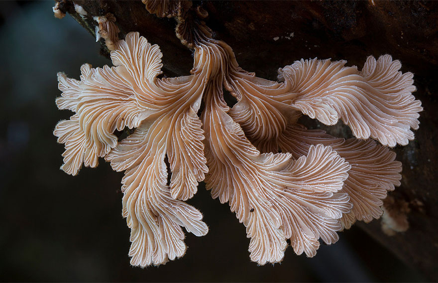 fotografia-funghi-interessanti.05