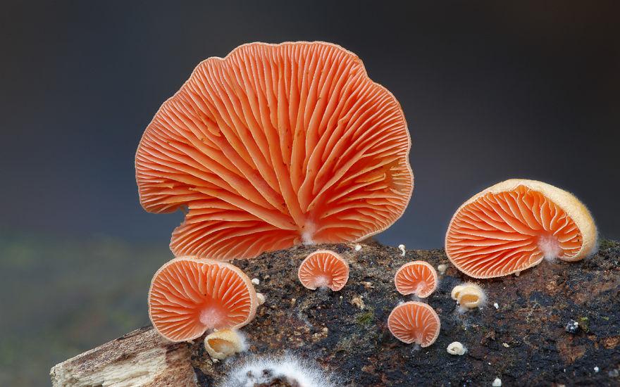 fotografia-funghi-interessanti.07