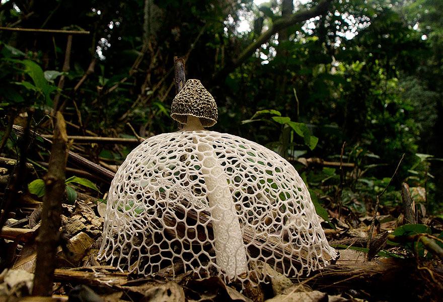 fotografia-funghi-interessanti.12