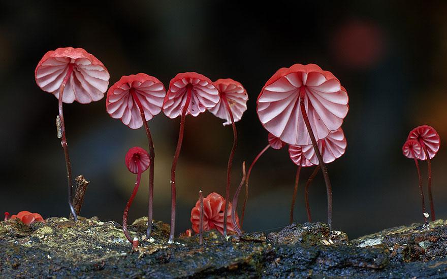 fotografia-funghi-interessanti.13