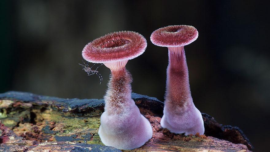 fotografia-funghi-interessanti.15