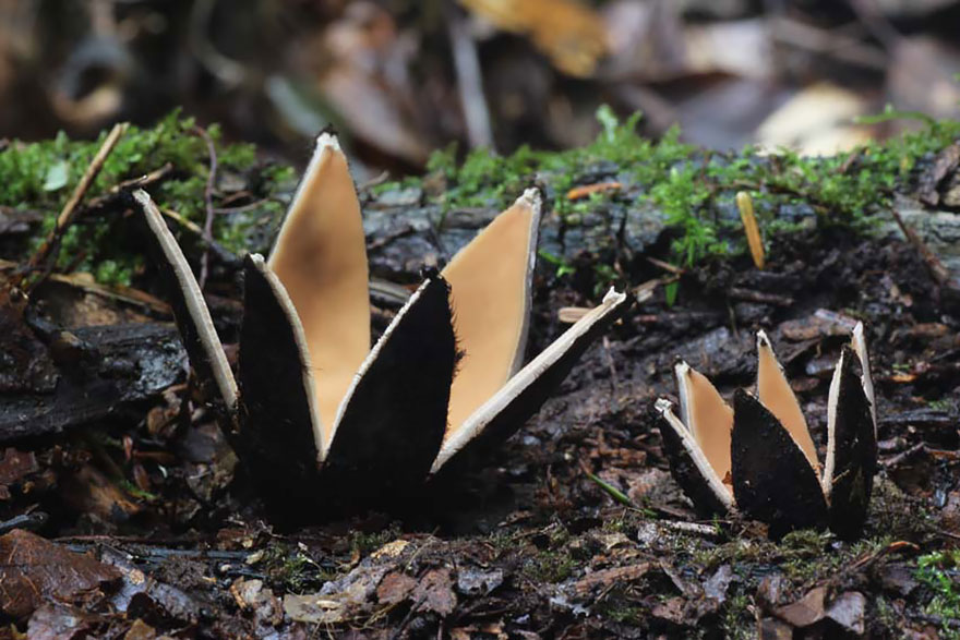 fotografia-funghi-interessanti.16