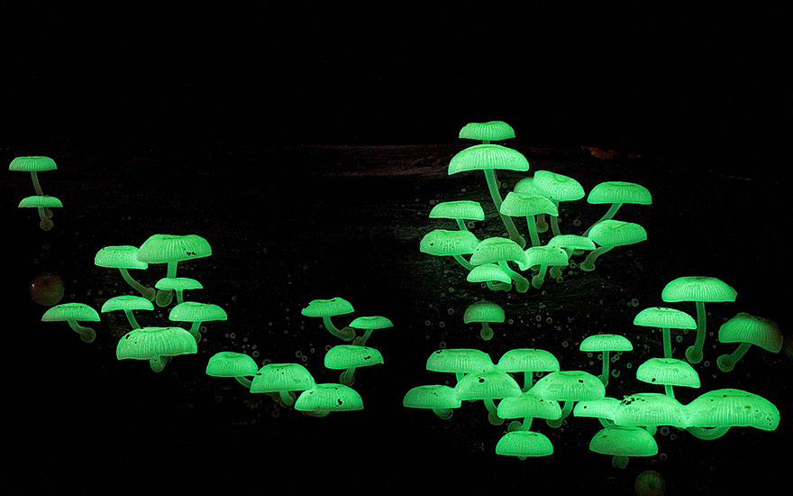 fotografia-funghi-interessanti.17