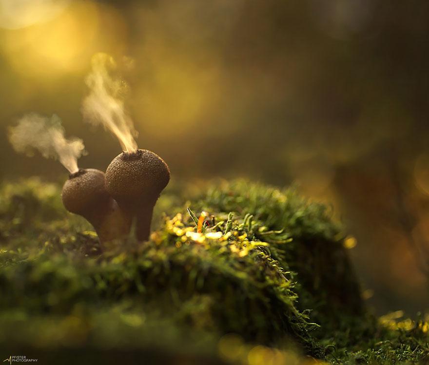 fotografia-funghi-interessanti.22