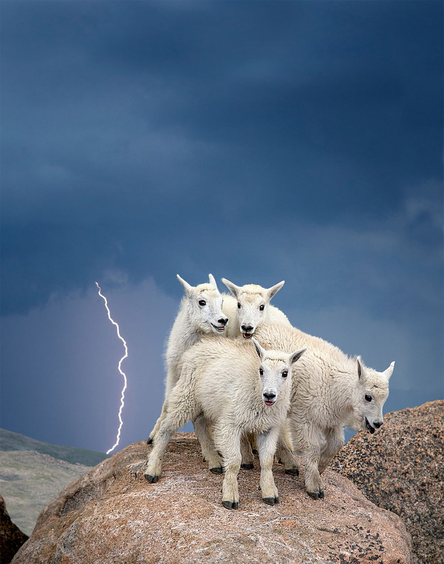 fotografia-natura-america-concorso-wilderness-forever-05