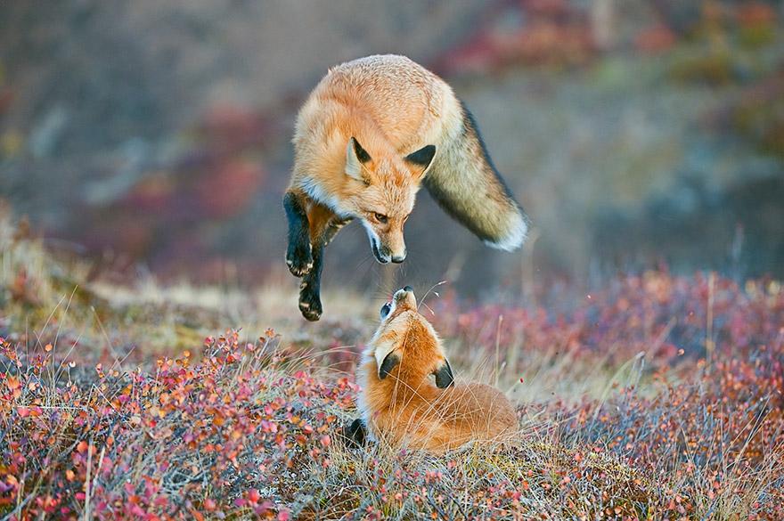 fotografia-natura-america-concorso-wilderness-forever-11