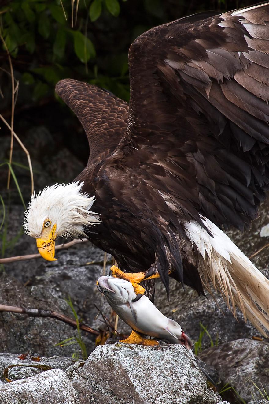 fotografia-natura-america-concorso-wilderness-forever-16