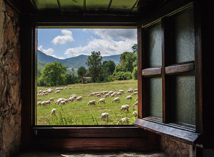 greggi-di-pecore-nel-mondo-03