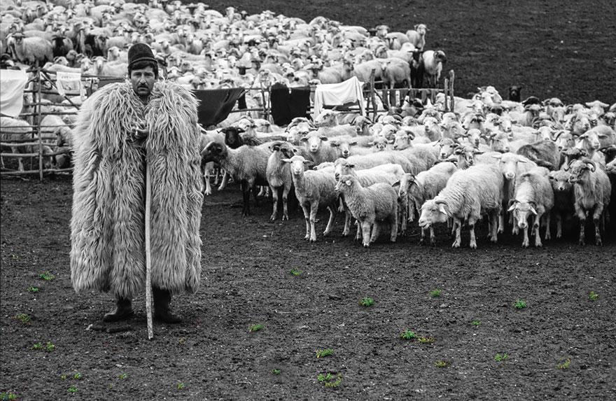 greggi-di-pecore-nel-mondo-04