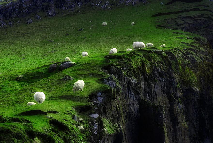 greggi-di-pecore-nel-mondo-06