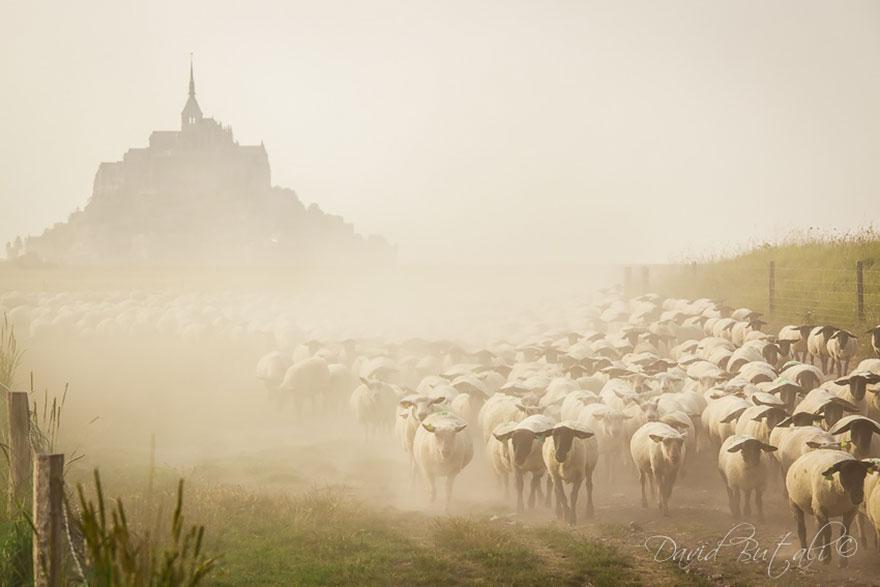greggi-di-pecore-nel-mondo-07