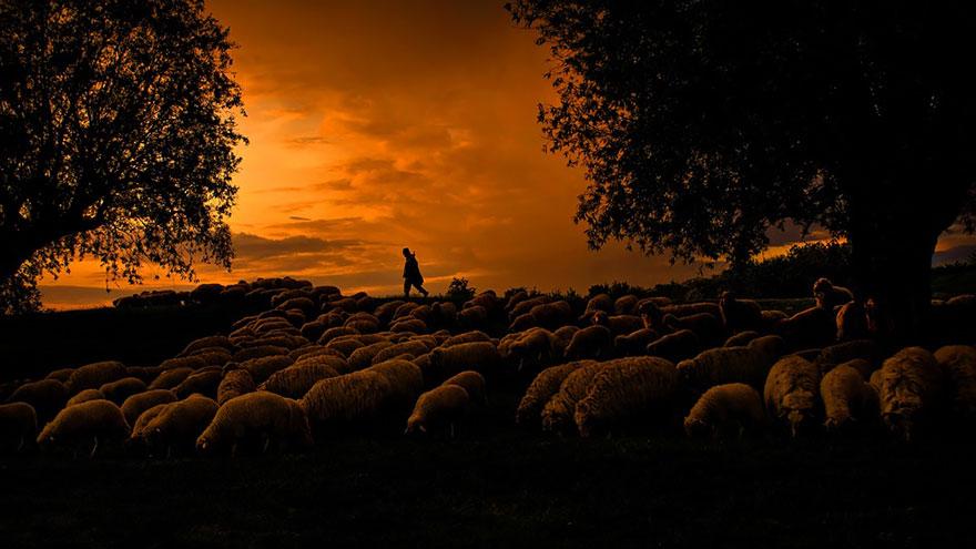 greggi-di-pecore-nel-mondo-13