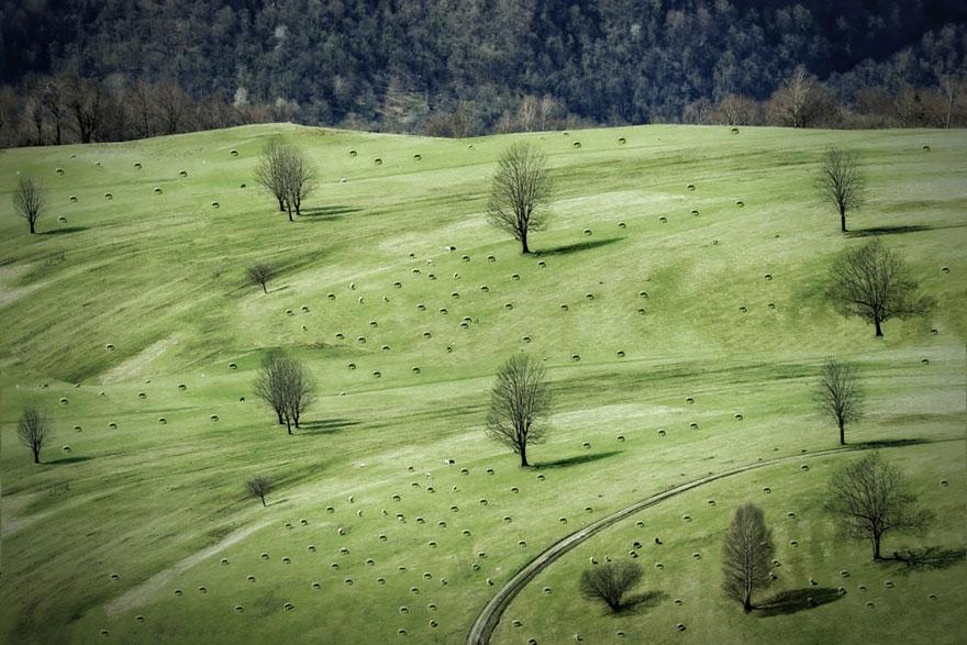 greggi-di-pecore-nel-mondo-14