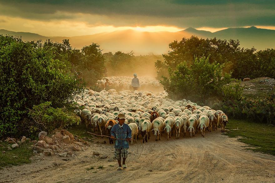 greggi-di-pecore-nel-mondo-16