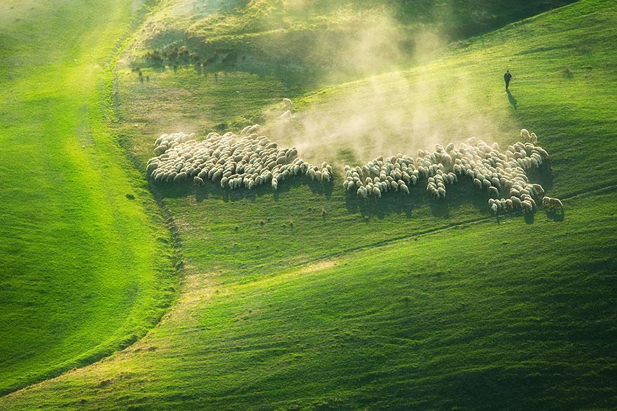 greggi-di-pecore-nel-mondo-25