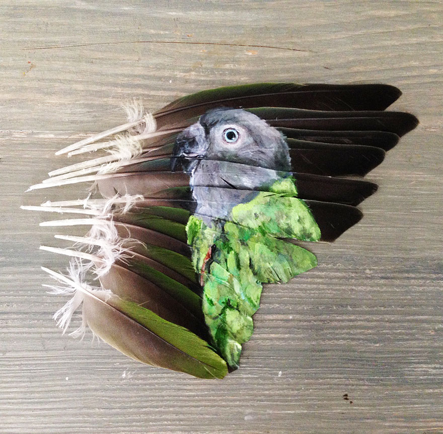 olio-acrilico-pittura-penne-piume-pappagallo-jamie-homeister11