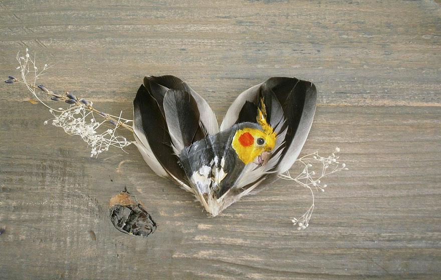 olio-acrilico-pittura-penne-piume-pappagallo-jamie-homeister15