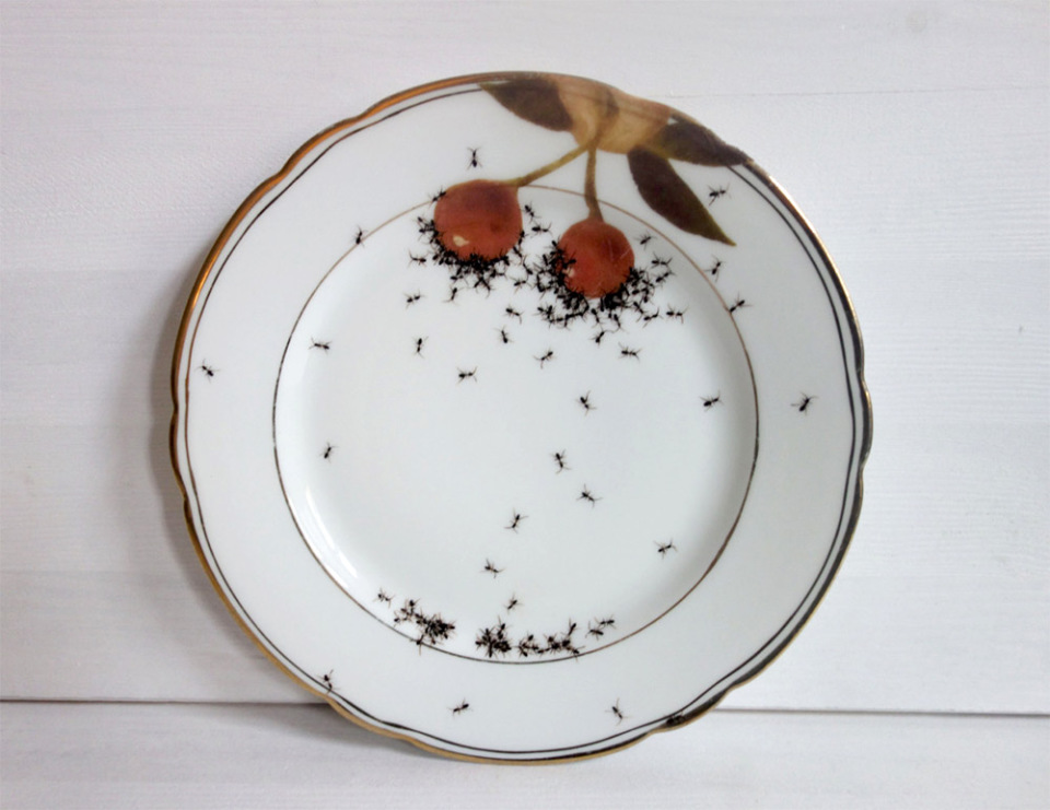 piatti-porcellana-dipinti-a-mano-formiche-Evelyn-Bracklow-1