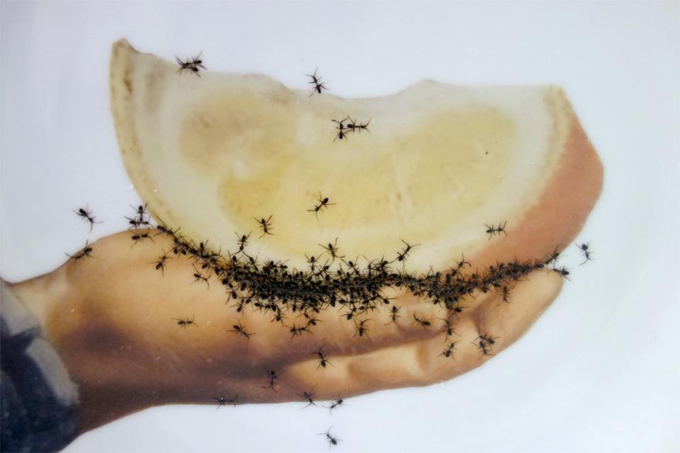 piatti-porcellana-dipinti-a-mano-formiche-Evelyn-Bracklow-6
