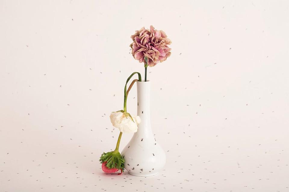 piatti-porcellana-dipinti-a-mano-formiche-Evelyn-Bracklow-9