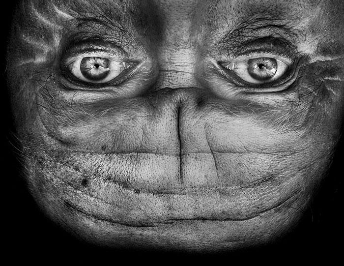 ritratti-fotografici-sottosopra-alieni-alienation-Anelia-Loubser-09