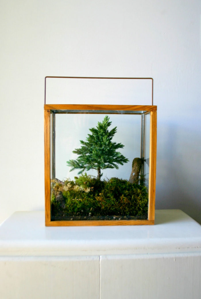 terrari-vasi-mini-serre-piante-appartamento-02