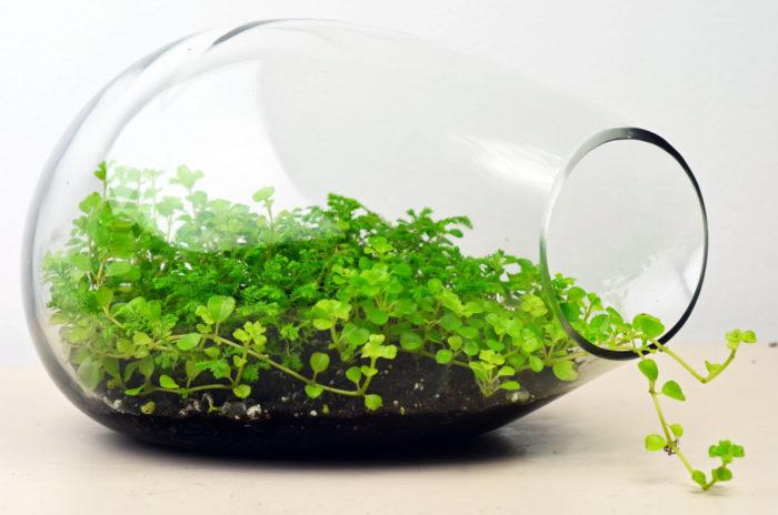 terrari-vasi-mini-serre-piante-appartamento-12