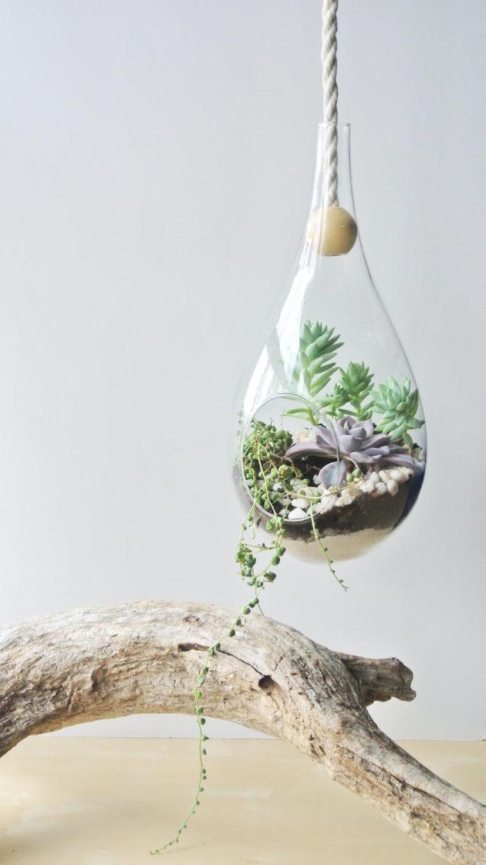 terrari-vasi-mini-serre-piante-appartamento-16
