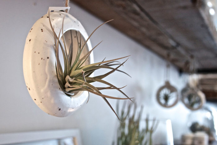 terrari-vasi-mini-serre-piante-appartamento-19