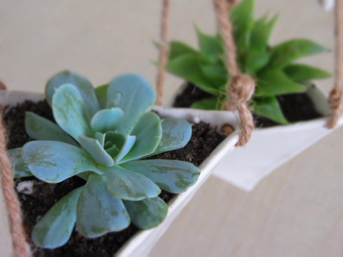 terrari-vasi-mini-serre-piante-appartamento-202