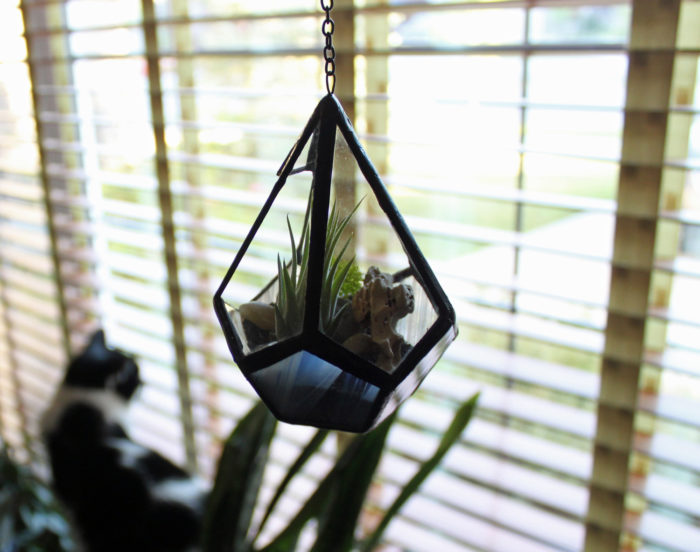terrari-vasi-mini-serre-piante-appartamento-203