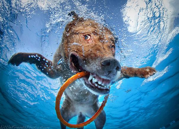 underwater-dogs-cani-sotto-acqua-seth-casteel-02