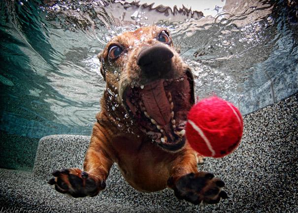 underwater-dogs-cani-sotto-acqua-seth-casteel-03
