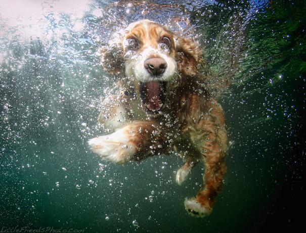 underwater-dogs-cani-sotto-acqua-seth-casteel-05