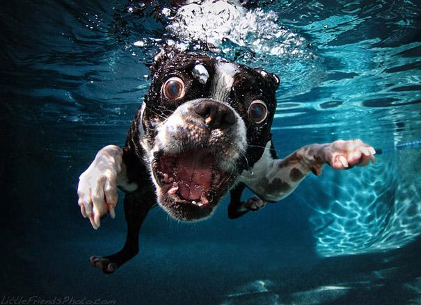 underwater-dogs-cani-sotto-acqua-seth-casteel-07