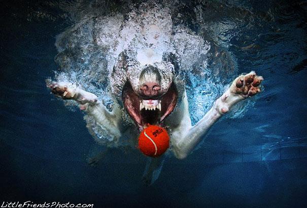 underwater-dogs-cani-sotto-acqua-seth-casteel-09