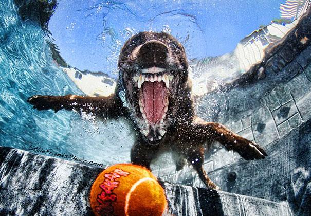 underwater-dogs-cani-sotto-acqua-seth-casteel-10