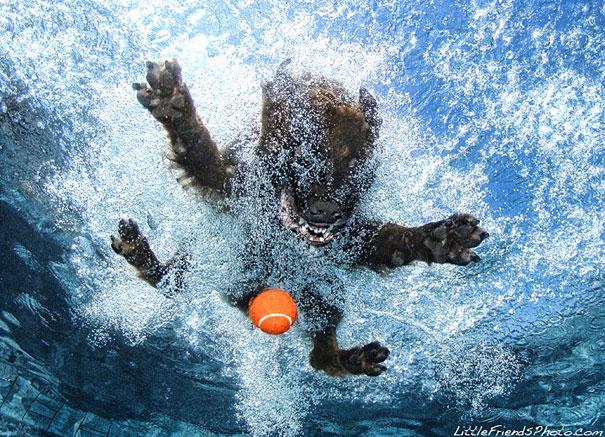 underwater-dogs-cani-sotto-acqua-seth-casteel-11