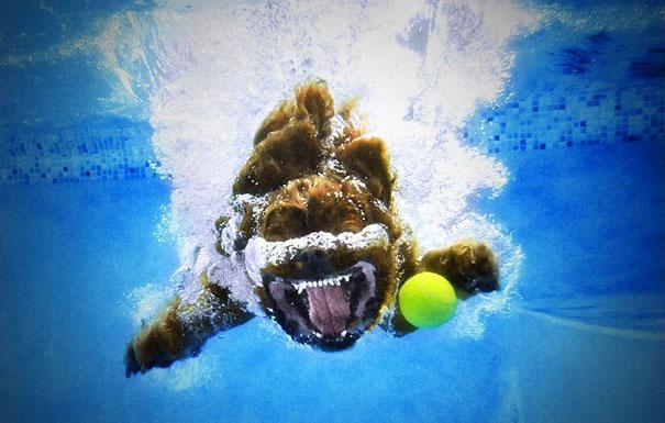 underwater-dogs-cani-sotto-acqua-seth-casteel-12