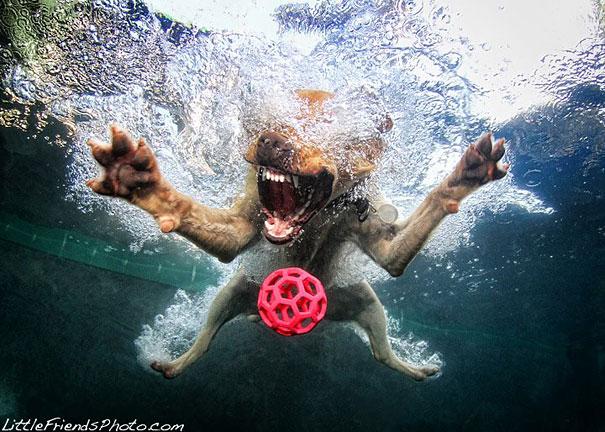 underwater-dogs-cani-sotto-acqua-seth-casteel-13