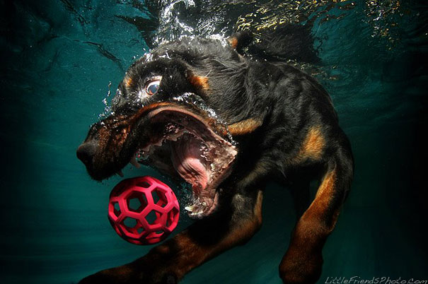 underwater-dogs-cani-sotto-acqua-seth-casteel-14