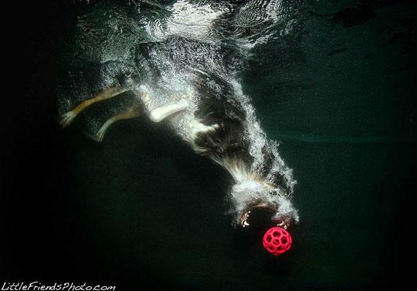 underwater-dogs-cani-sotto-acqua-seth-casteel-15