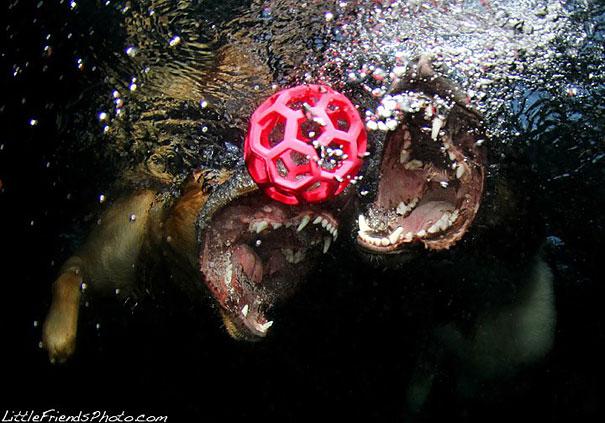 underwater-dogs-cani-sotto-acqua-seth-casteel-16