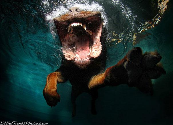 underwater-dogs-cani-sotto-acqua-seth-casteel-17