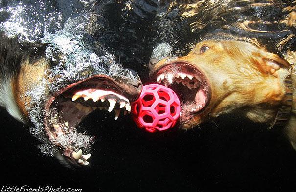 underwater-dogs-cani-sotto-acqua-seth-casteel-19