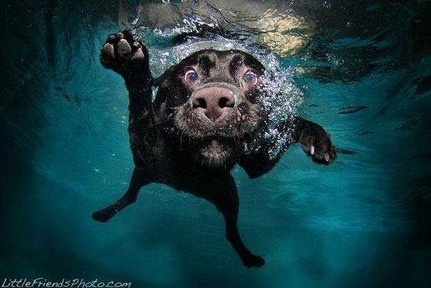 underwater-dogs-cani-sotto-acqua-seth-casteel-21