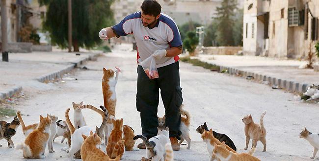 uomo-siria-sfama-gatti-abbandonati-1