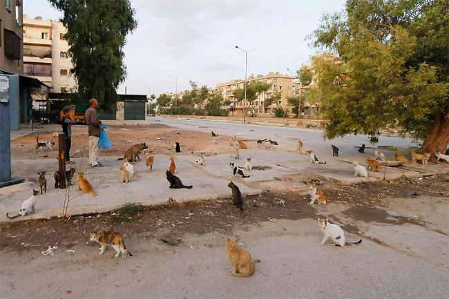 uomo-siria-sfama-gatti-abbandonati-3