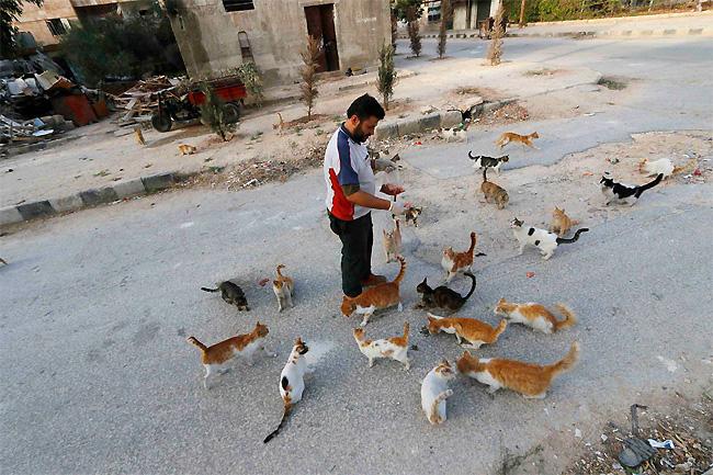 uomo-siria-sfama-gatti-abbandonati-4