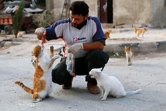 uomo-siria-sfama-gatti-abbandonati-5